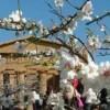 Festa del Mandorlo in Fiore (11-12 marzo 2017)