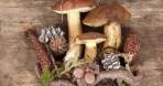 Altomonte & la Sagra dei Funghi – Domenica 21 Novembre 2021